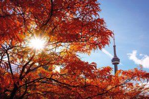 Trimestre, semestre e anno scolastico in Canada